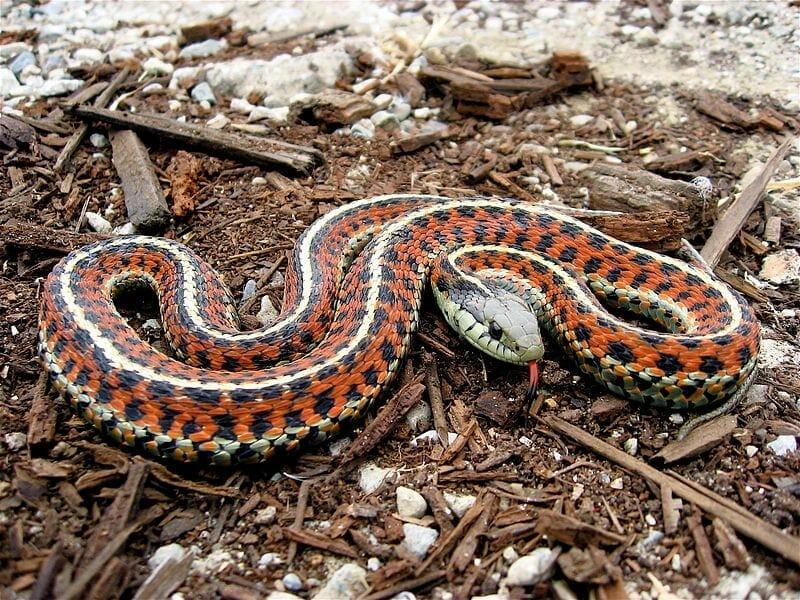 Snakes on a Plane: Brisbane Stowaway