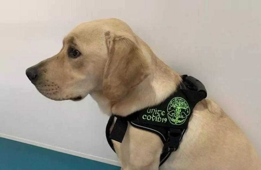 Dogs Detect Covid-19 – The Test Results Are In