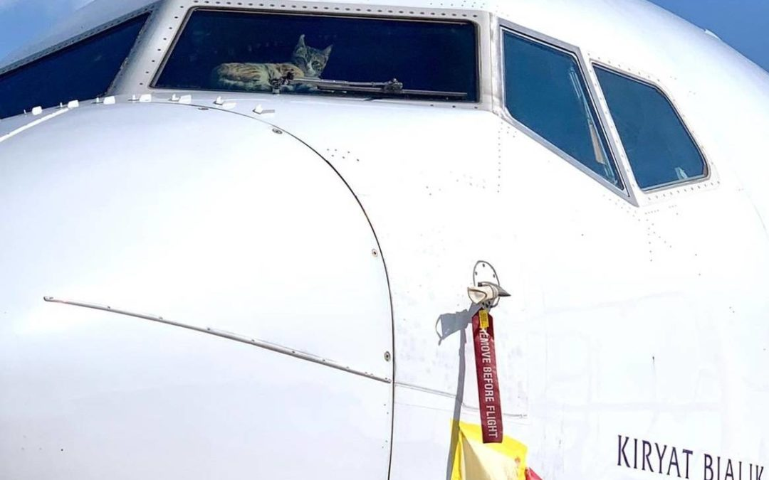 737 Cat Burglar? Feline Invader in Parked Jet!