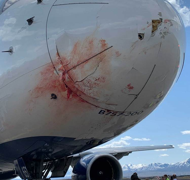 Delta 757 With Utah Jazz Basketball Team Has Bird Strike!