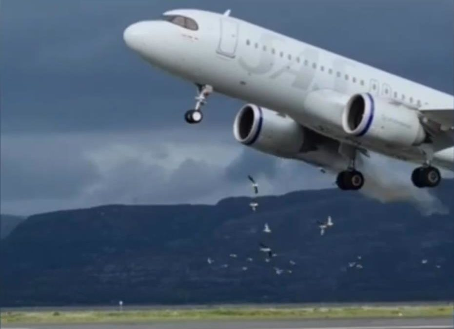 INCIDENT: A320neo Go-Around To Avoid Birds (but fails)!